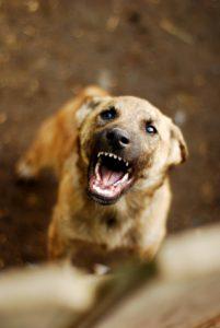 Dog Bite Attorneys Minneapolis St. Paul MN